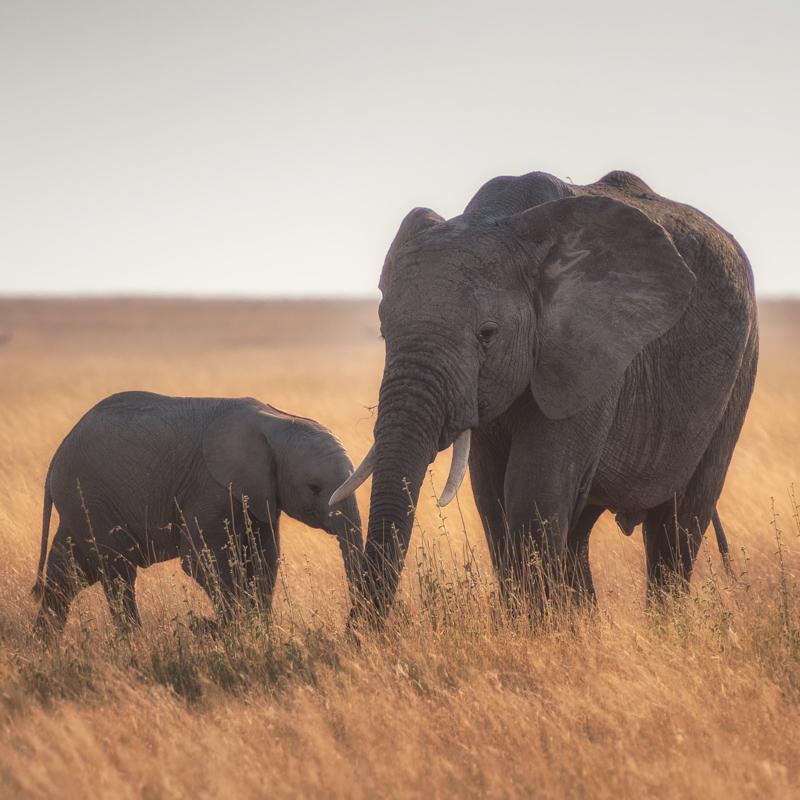 Tanzania wycieczki