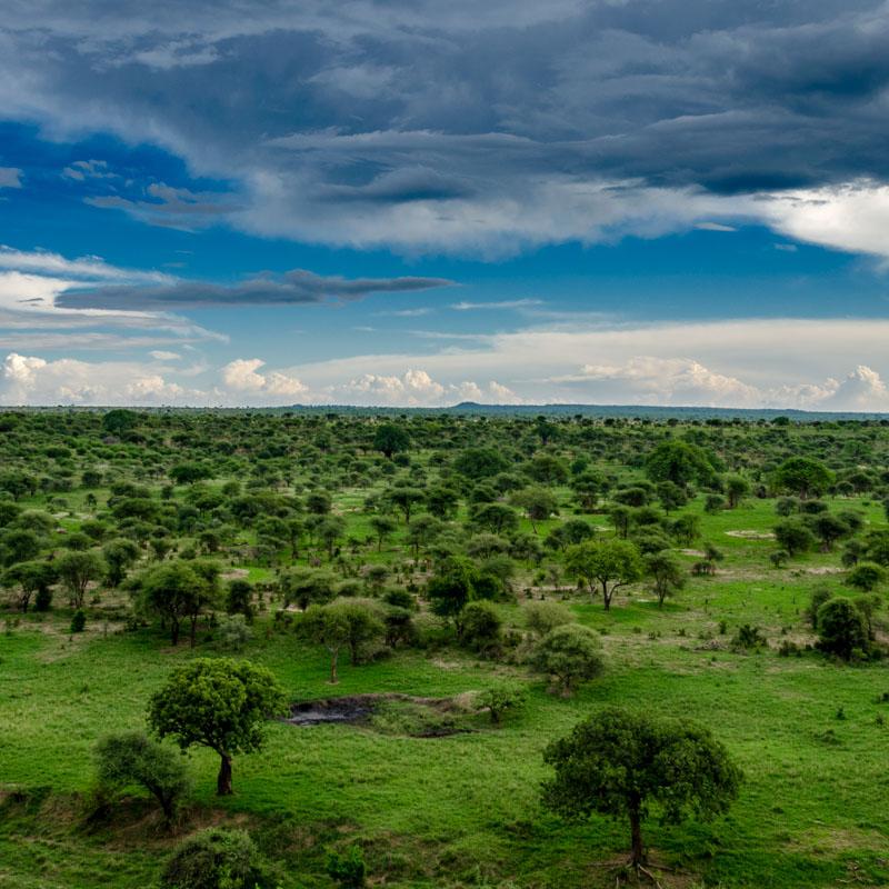 Park Narodowy Tarangire
